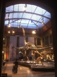 Naturkundemuseum 2
